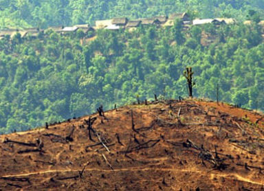Burma deforestation
